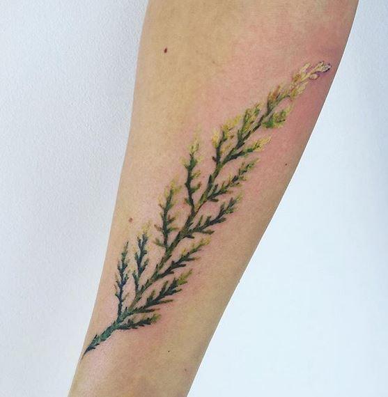 Tatouage avant-bras de tige botanique